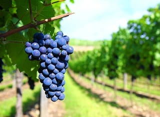 South African Wine: Harvest Report 2012