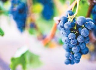 Van wingerd tot wyn : hoe beheer jy kwaliteit?