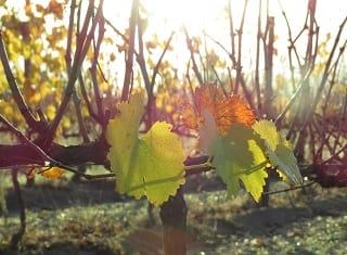 Stay updated on viticultural practices, technology at regional days