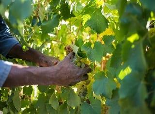 Vineyard training kicks off