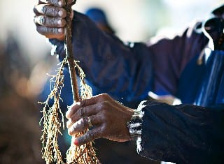 Minimum farm worker wages up by 8%