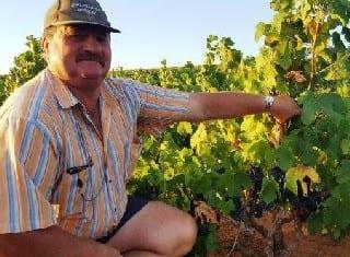 Puikste Pinotage-blok in Paarl/Swartland vereer