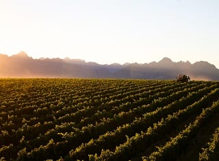 Vinpro Position Statement on Land Expropriation