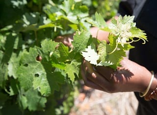 SA Wine Industry Transformation Q&A