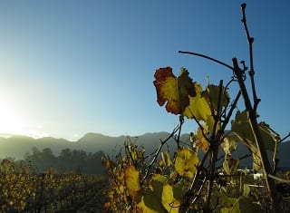 Prepare vines for 2019 harvest
