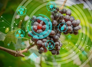 Get the latest on wine grape cultivation
