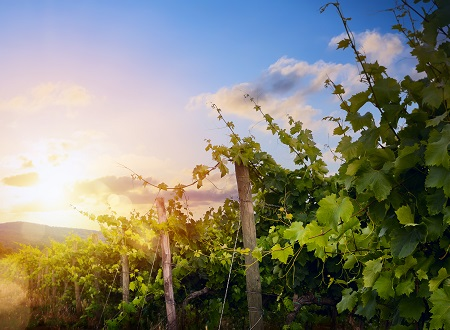Information sessions reflect on wine industry status, vineyard trends