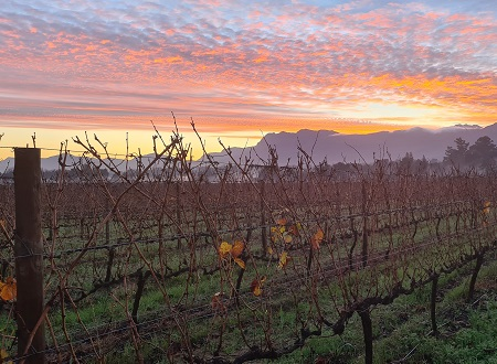 Wine industry grateful for cold, wet winter