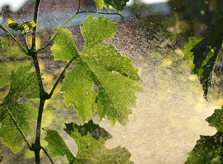 Alternative ways to manage weeds and fungal diseases